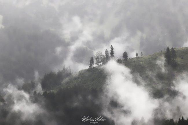 25.02.2021: Nebel.